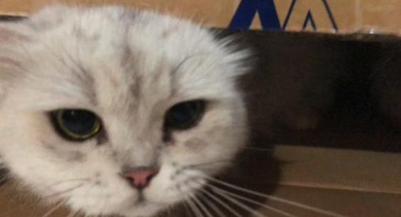 中国十大毒猫粮,到底是真是假?